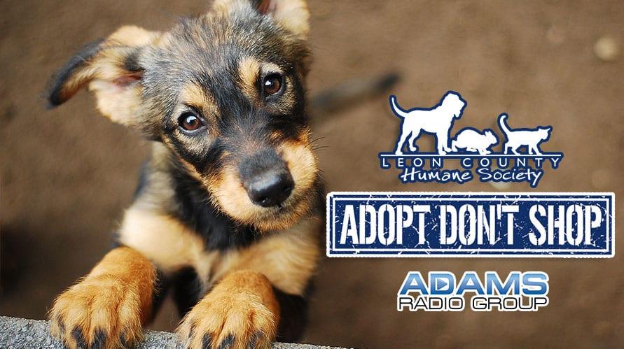 Leon County Humane Society |Tiny aka Tootie