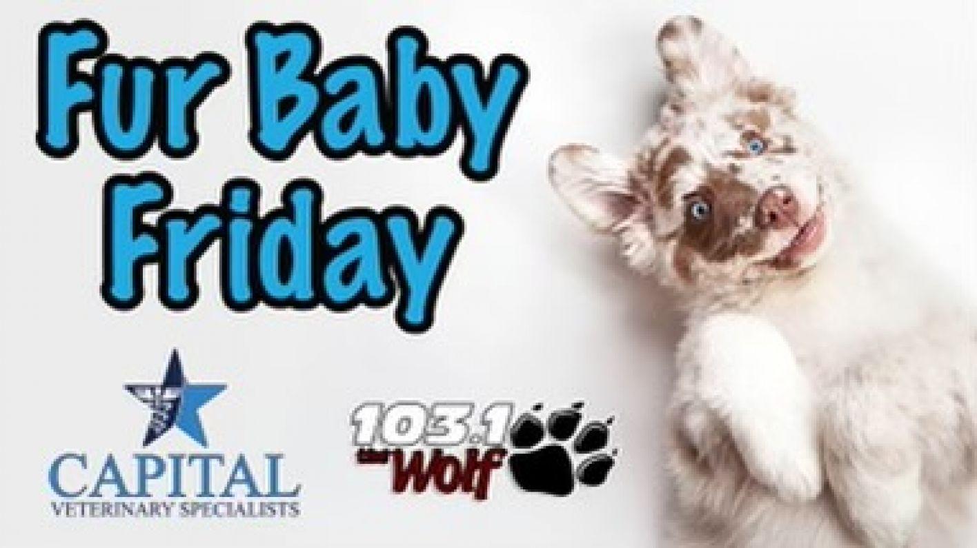 Fur Baby Friday's!